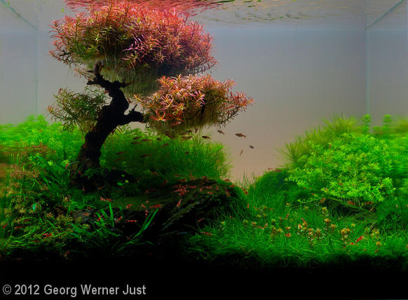 Whispering Winds aquascape by Georg Werner Just