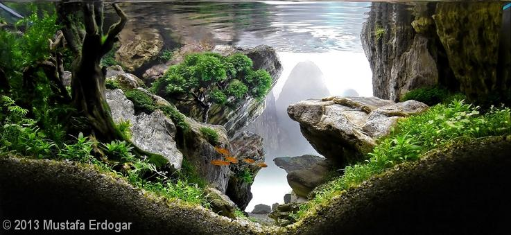 'The Crag' aquascape by Mustafa Erdogar