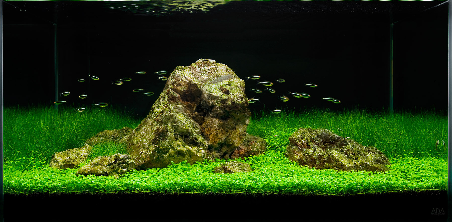 Ada Iwagumi aquascape by Jeff Senske