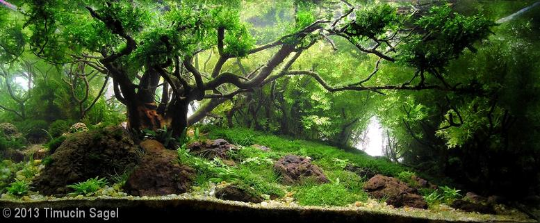 'Charm of Light' aquascape by Timucin Sagel