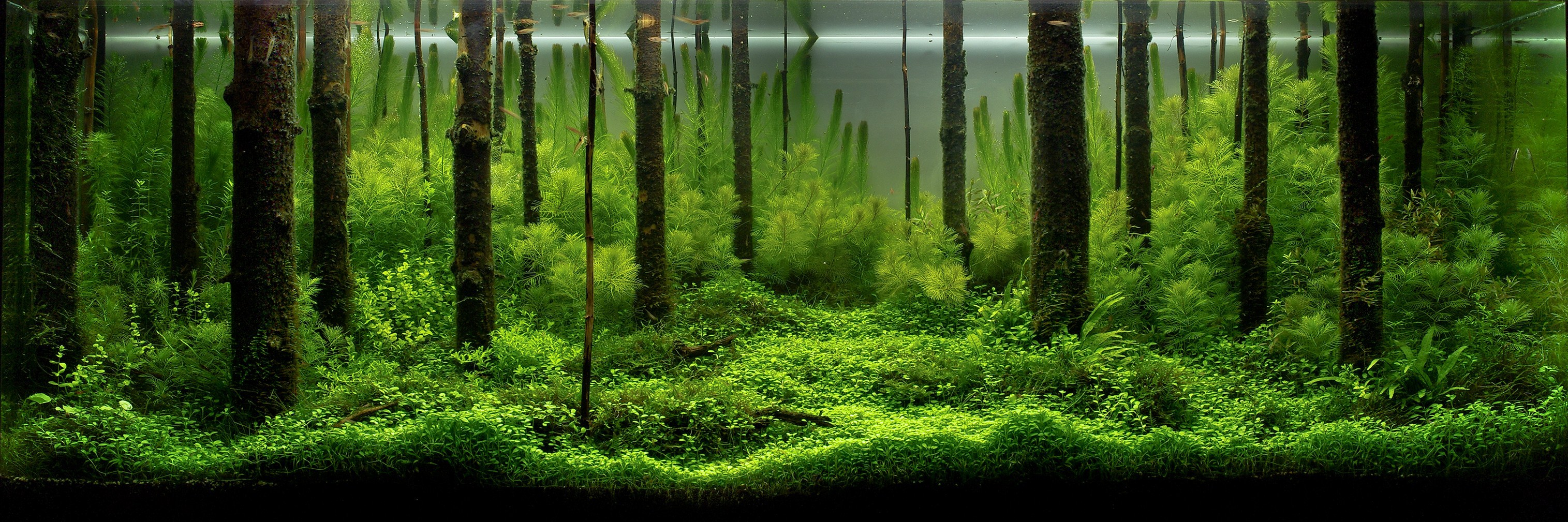 'Forest Scent' aquascape by Pavel Bautin