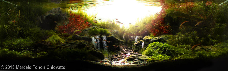 'Sunrise in the valley' aquascape by Marcelo Tonon Chiovatto