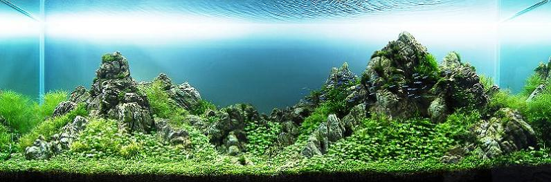 'Towering Peaks' aquascape by Chow Wai Sun