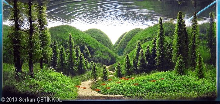 'Whisper of the Pines' aquascape by Serkan ÇETİNKOL